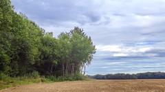 Le coin du bois