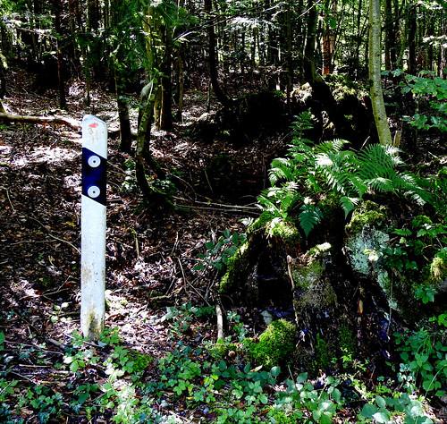 Ein Männlein steht im Wald...