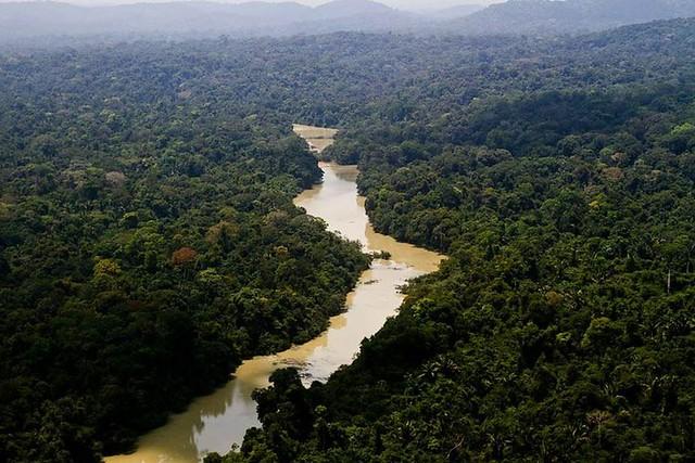 O Dia da Amazônia é celebrado anualmente em 5 de setembro.  - Créditos: Leonardo Medeiros / ICMBio