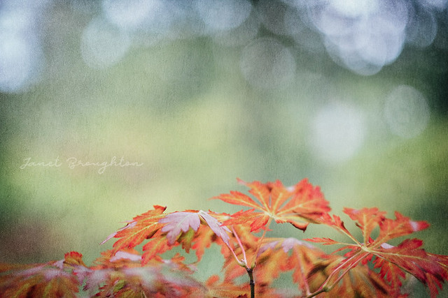 Leaves + Bokeh