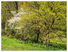 Days in Spring