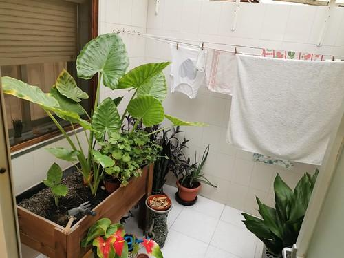 Fabuloso patio, completamente reformado, muy coqueto. Solicite más información a su inmobiliaria de confianza en Benidorm  www.inmobiliariabenidorm.com