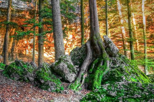 Mossy stones and burning rocks ©twe2016☼