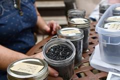 Biochar samples in jar