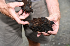 Compost manure with biochar