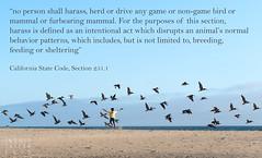 Be a Bird-Friendly Beach Human