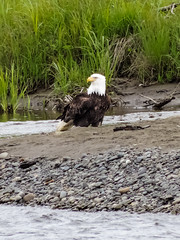 Deep Creek State Recreation Area, Alaska