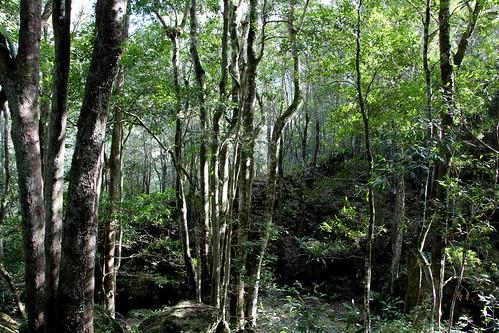 Minnamurra Falls Track