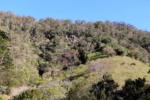 Along the Jamberoo Mountain Road