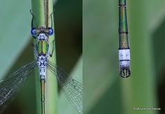 Similar species collages