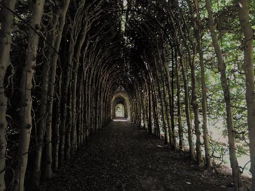 Tree tunnel / Berceau in garden of Weldam Castle