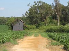 Dillon County Barn
