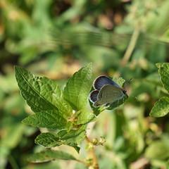 20190907 butterfly