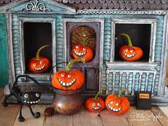 Silly pumpkin patch