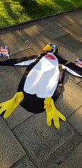 Image by PentlandPirate of the North (pentlandpirate) and image name Brexit Penguin photo  about He may looked deflated and trampled on, but he's still smiling because he knows he stands for what is right: democracy. And whilst others may try to steal his freedom from him he will rise again and again. He will never surrender to the liars, the cheats, and bullys who try to take what is rightly h