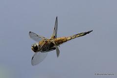 In flight III