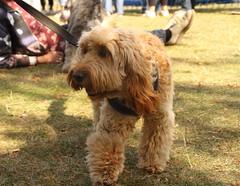 Victoria Park Dog Show / Victoria Park / E9 / 08-Sep 2019