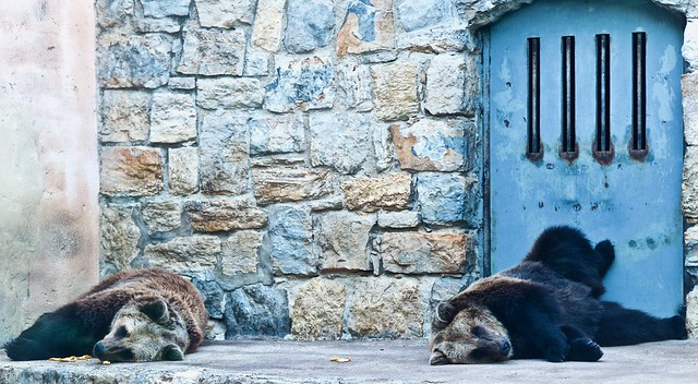Photo:Captive Brown Bear [Urso Pardo] (2019) By pedrosimoes7