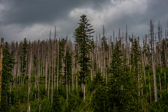 Moody Forest Scene In High Tatra Mountain Park