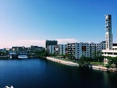 Tampa Bay Morning