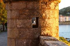 Dos jóvenes gaviotas y un castillo al ocaso