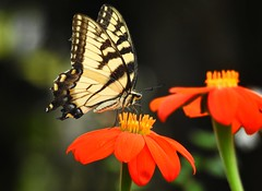 If nothing ever changed, there'd  be no butterfly.  ~ Unknown