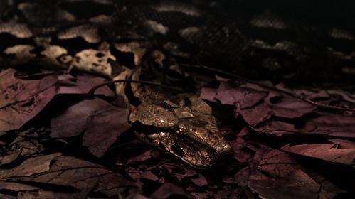 The predator of jungle ground. @aquazooduesseldorf .  . @Moonfuchspix . @moonfuchs  #nikon #Fotografie #photography #d5100 #butterfly #schmetterling #aqua #zoo #aquazoo #lemon #zitronen #falter #green #natur #nature #tree #baum #leaves #jungle #dschungel