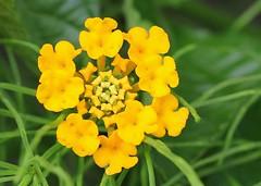 Japan - Flowers