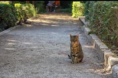 Royal Garden Cat