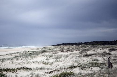 533 - Kangaroo Meets Sea