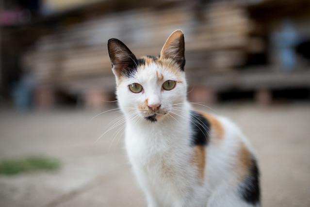 Portrait of An little cat. Cat sitting on concrete porch.
