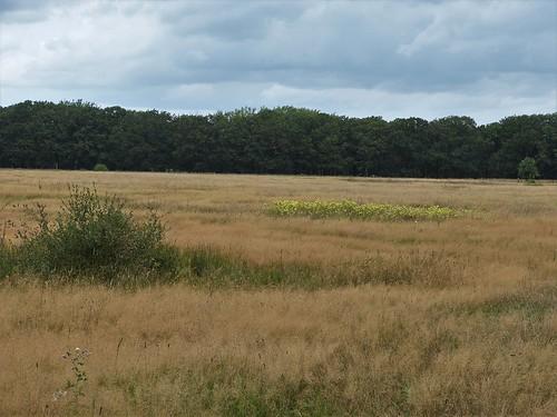 Landscape near Heeze - Noord-Brabant