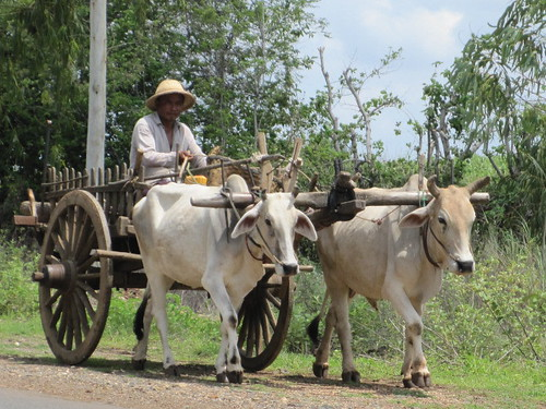 Daily routine - Myanmar