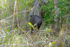 Act four : Don't stay too long and let the tapir go ... Think how lucky you are and smile !