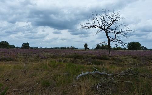 Strabrechtse Heide near Heeze - Noord-Brabant