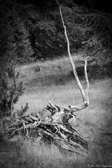 La racine Cyclope - Photo of Entraunes