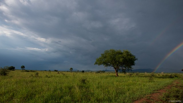 IMGP5963 After the rainstorm