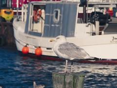 Hafen Burgstaaken | 11. September 2019 | Fehmarn - Schleswig-Holstein - Deutschland
