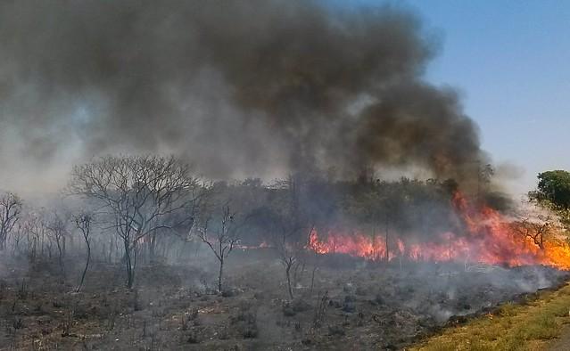 Queimadas em terras indígenas aumentam 88% em 2019