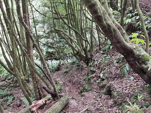 Senderismo Ruta de Paupique a Ribera do Faial da Terra Isla San Miguel Azores Portugal 03