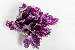 Bunch of fresh purple Basil on white background. Top view