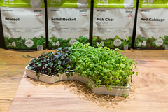 Plantui Microgreens-Garten mit Radieschen und Brokkoli Kresse