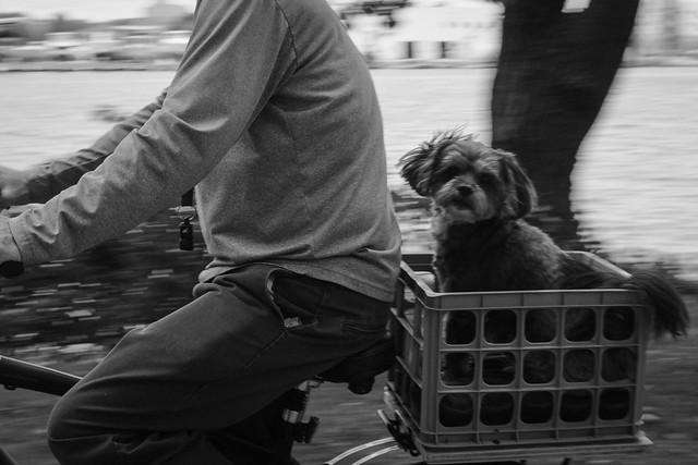 Dog in a basket #LifeinOshkosh