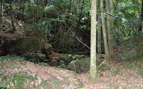Gap Creek sub tropical rainforest