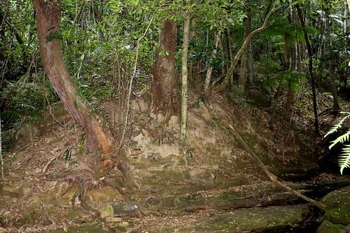 sub tropical rainforest near Gap Creek