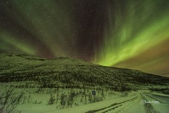 Artic Lights Isla de Senja