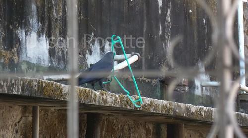 A Crow Has Stolen my Coat Hangar (#2)