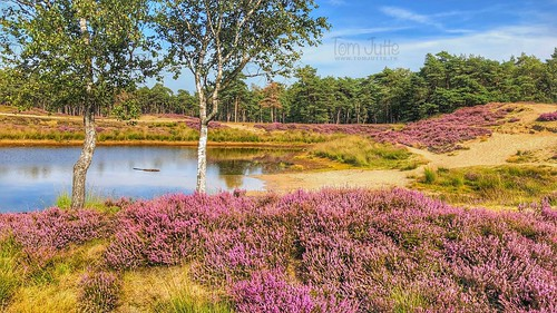 Small lake on the historic Heidestein estate, Zeist, Netherlands - 2993