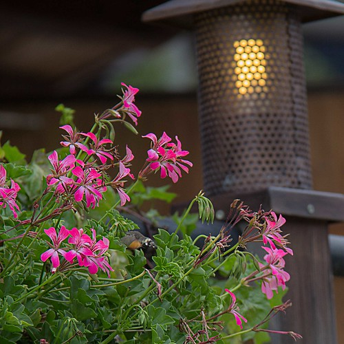 Flowers and a moth