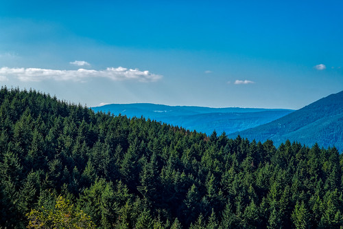 View towards the Vosges